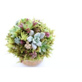 オーダー品★苔と多肉植物のポット(ギャザリング)