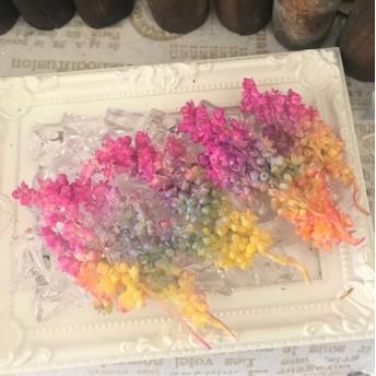 特大インディアンコーンアソート ️ハーバリウム花材プリザーブドフラワー