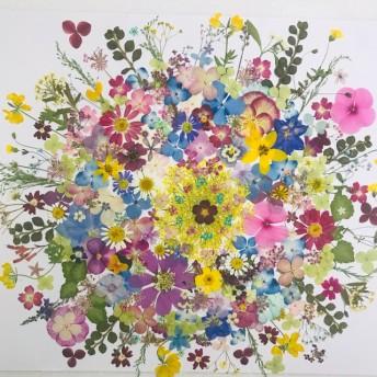押し花 花材 素材☆ニチニチ草、紫陽花、コスモス、アリッサム他小花MIXたくさん