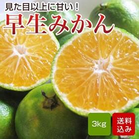 早生みかん 3kg 家庭用 S-Lサイズ混合 熊本県産