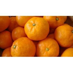 令和元年産 田村みかん(2L~3L) 約5kg入 【果樹園紀の国】