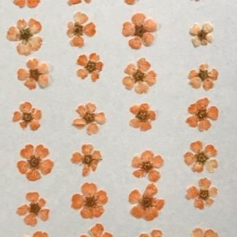 押し花素材パック コデマリ(オレンジ)28個入り No1071