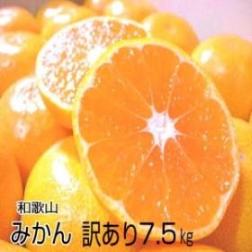 【送料無料】 濃厚な味の温州みかん【訳あり・家庭用】7.5kg とろける美味しさ!和歌山産