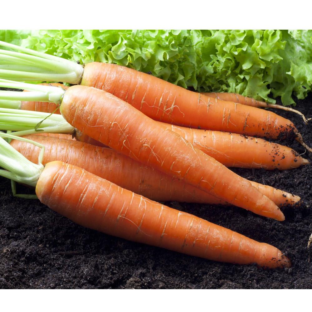 鮮採家 鮮採紅蘿蔔5台斤1箱