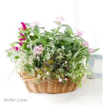 ピンク色のお花のバスケット(寄せ植え)