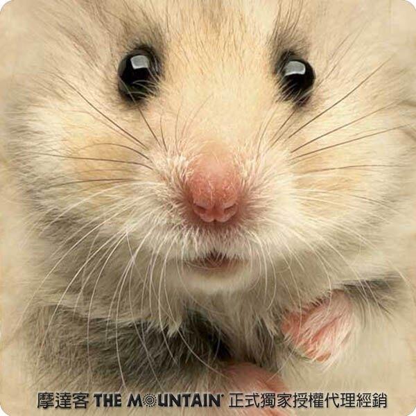 『摩達客』預購-美國進口【The Mountain】自然純棉系列 倉鼠臉 T恤