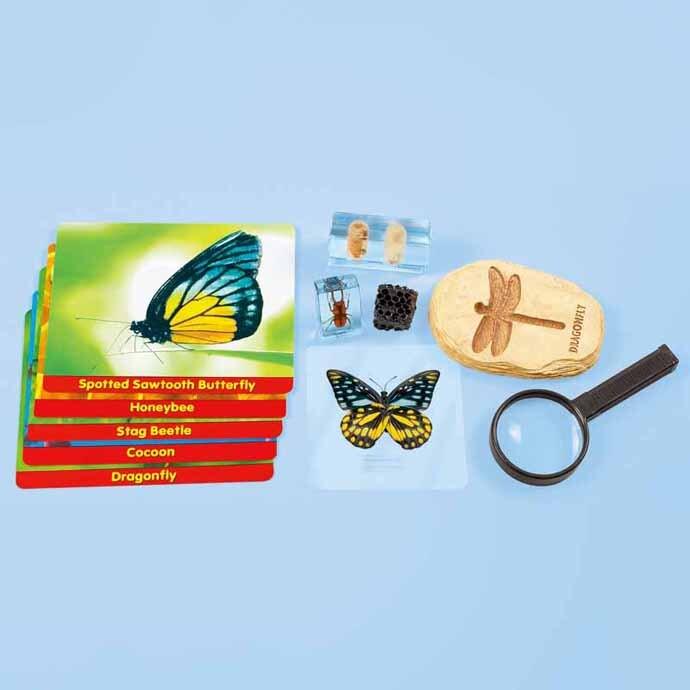 【華森葳兒童教玩具】科學教具系列-昆蟲標本探索家 N8-HH585