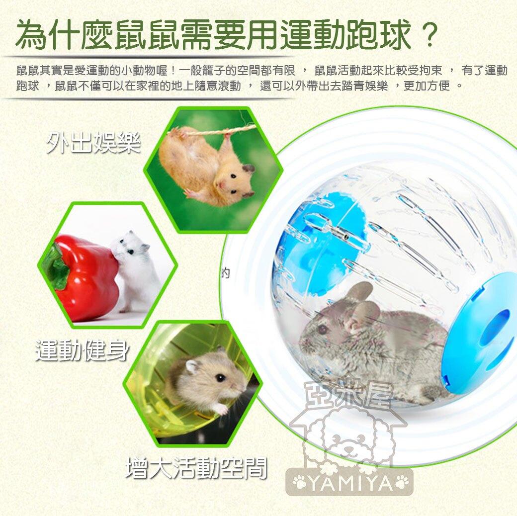 Carno卡諾小倉鼠跑球18.5cm 倉鼠寵物用品玩具滾球 運動水晶跑球 滾球運動  健身運動《亞米屋Yamiya》