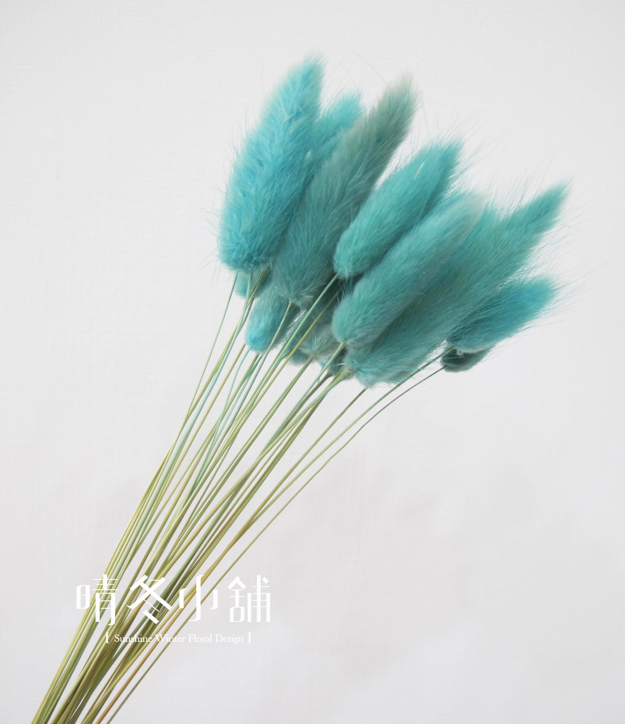 [晴冬小舖] 藍綠色/湖水綠兔尾草-進口乾燥花材(乾燥花束 不凋花 乾燥花圈)3D1517