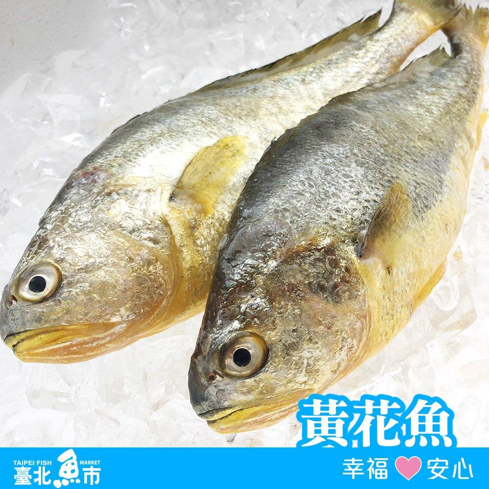 【台北魚市】黃花魚(黃魚) 460g10%