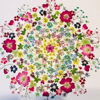 押し花 花材 素材☆ミニバラ、染めアリッサム 他 花MIXたくさんとおまけ