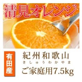 【ご家庭用訳アリ】紀州有田産清見オレンジ 7.5kg  【魚鶴商店】