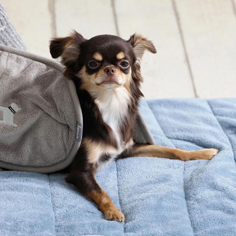 查理寵物吸水毛巾(手套款) 灰色