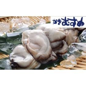 かきむすめ むき身牡蠣セット