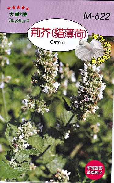 [荊芥/貓薄荷種子] 各式觀賞花卉種子 香草種子 蔬菜水果種子 . 單買種子。郵局運費40元起