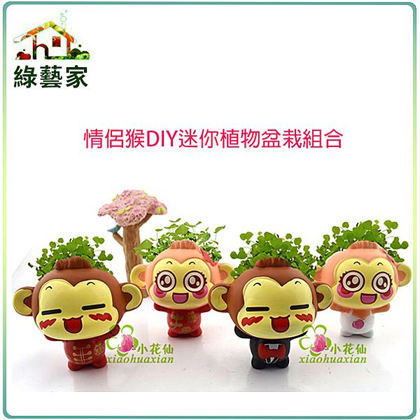 【綠藝家004-H21】情侶猴DIY迷你植物盆栽組合