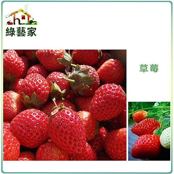 【綠藝家】I05.草莓種子(阿里巴巴)20顆