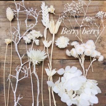 ホワイト系 送料無料 花材 ドライフラワー ハーバリウム