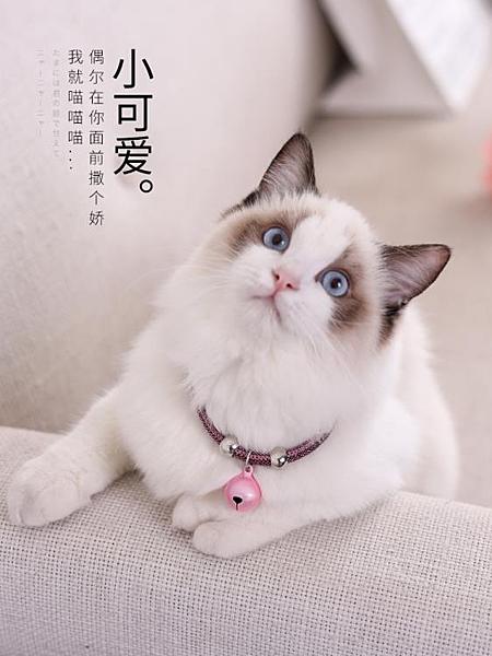 貓咪小鈴鐺小型犬寵物