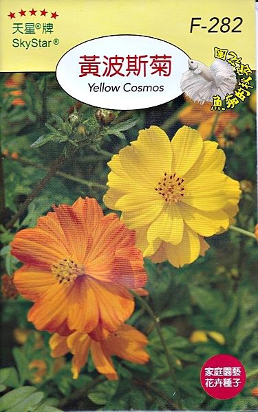 [黃波斯菊種子] 各式觀賞花卉種子 香草種子 蔬菜水果種子 . 單買種子。郵局運費40元起