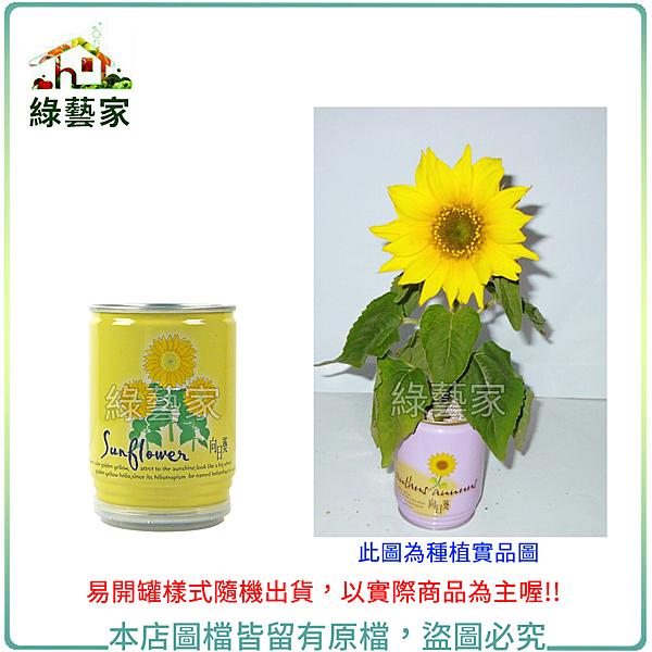 【綠藝家】iPlant易開罐花卉-向日葵