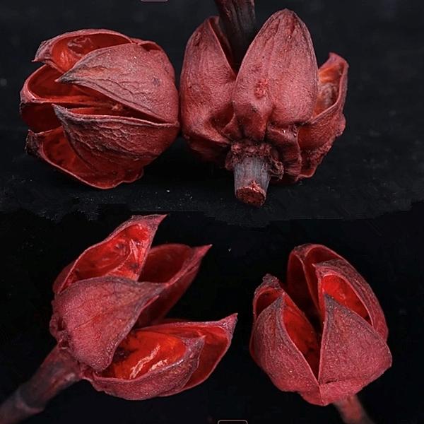 日本大地農園,24430-300紅色開心果,一份2個