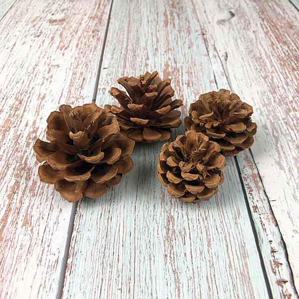BEAGLE 4-5公分 乾燥花 松果 單顆 松塔 素材 不凋花 人造花 乾燥花束 花藝設計 婚禮佈置 攝影佈景
