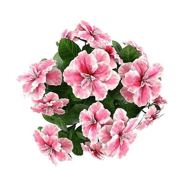 Visakha - 玫瑰天竺葵 Rose Geranium 單方純精油 (10ml)