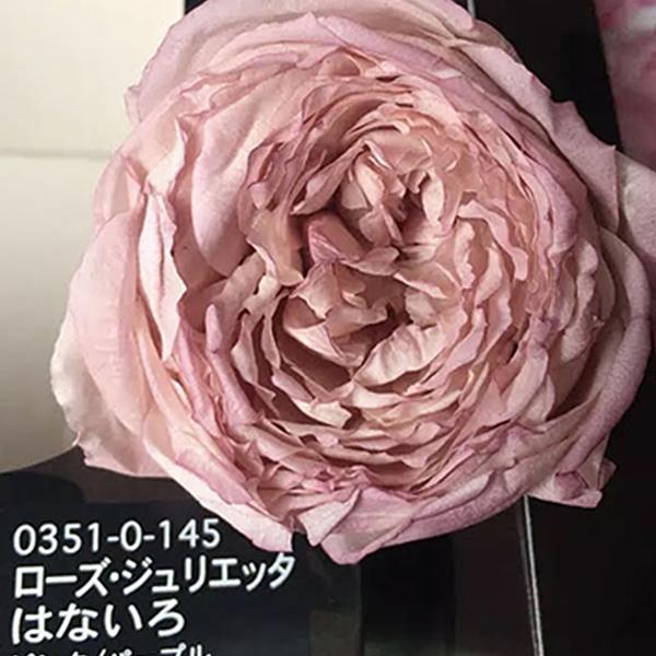 進口永生花紋唇花瓣,03510玫瑰花乾花,八音盒玻璃罩工藝品DIY材料包,一朵價