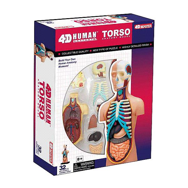 【4D Master】26051 立體拼組模型 人體解剖教學系列 器官