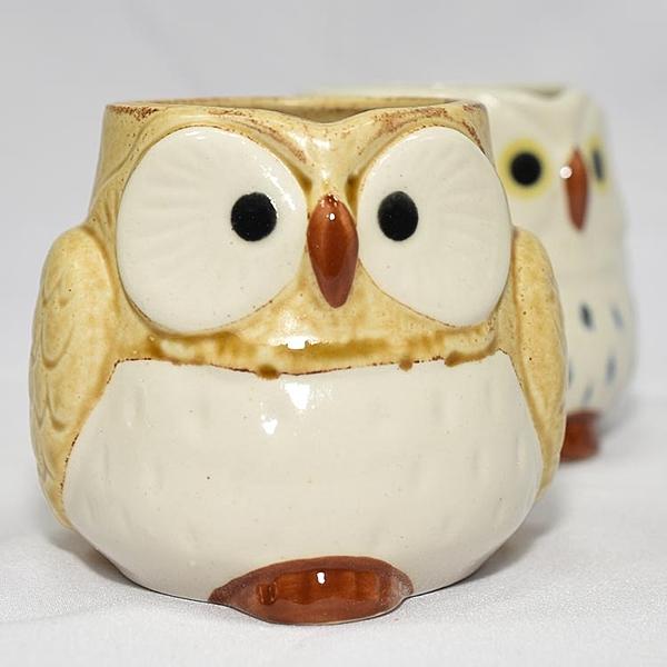 貓頭鷹 陶瓷馬克杯 日本製造 黃色