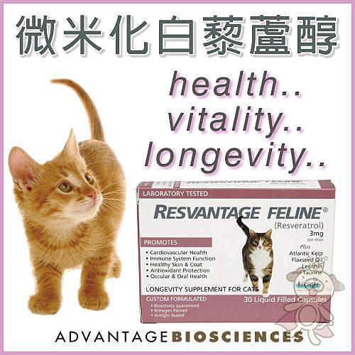 『寵喵樂旗艦店』RESVANTAGE CANINER微米化白藜蘆醇 愛貓專用