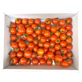 高知産フルーツトマト「メルベーユ」 約1.5kg(期間限定品)【C120】