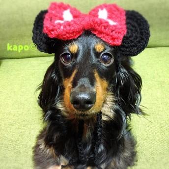 《ペット用》ネズミの帽子