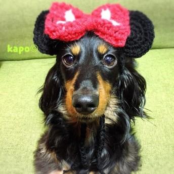 ネズミー帽子