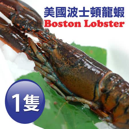 【築地一番鮮】加拿大直送-頂級波士頓龍蝦1隻(約500g/隻)免運組