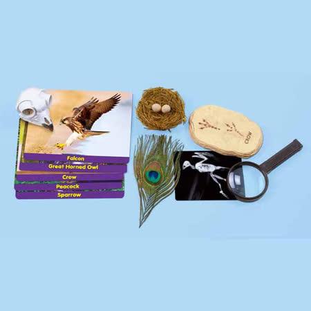 【華森葳兒童教玩具】科學教具系列-鳥類標本探索家 N8-HH582