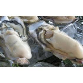 【仮屋漁業組合】仮屋湾産殻付き真牡蠣(3kg) カキナイフ・軍手付