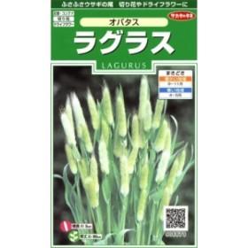 【種子】ラグラス オバタス サカタのタネ