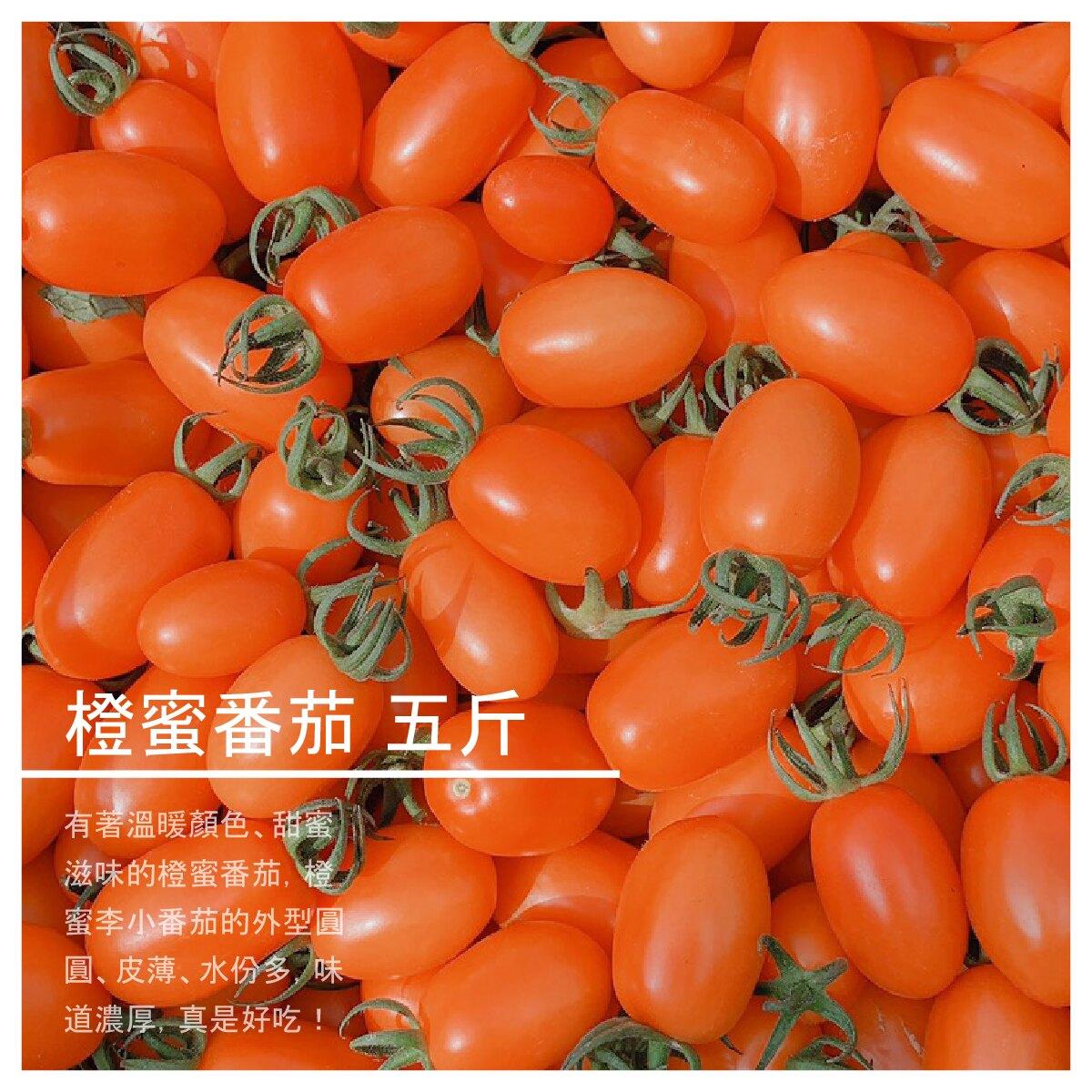 【結善園小番茄】橙蜜番茄 五斤
