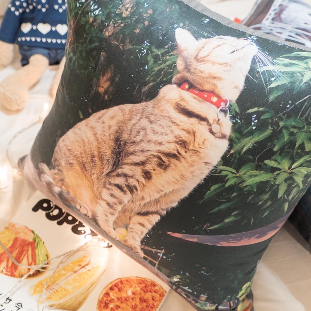 純棉 貓咪(2款可選)❤純棉方抱枕 45X45cm【棉床本舖】