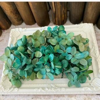 ピラミッドグリーンブルーバイカラーアジサイオーロララメ付き ️アジサイ小分け ️ハーバリウム花材プリザーブドフラワー