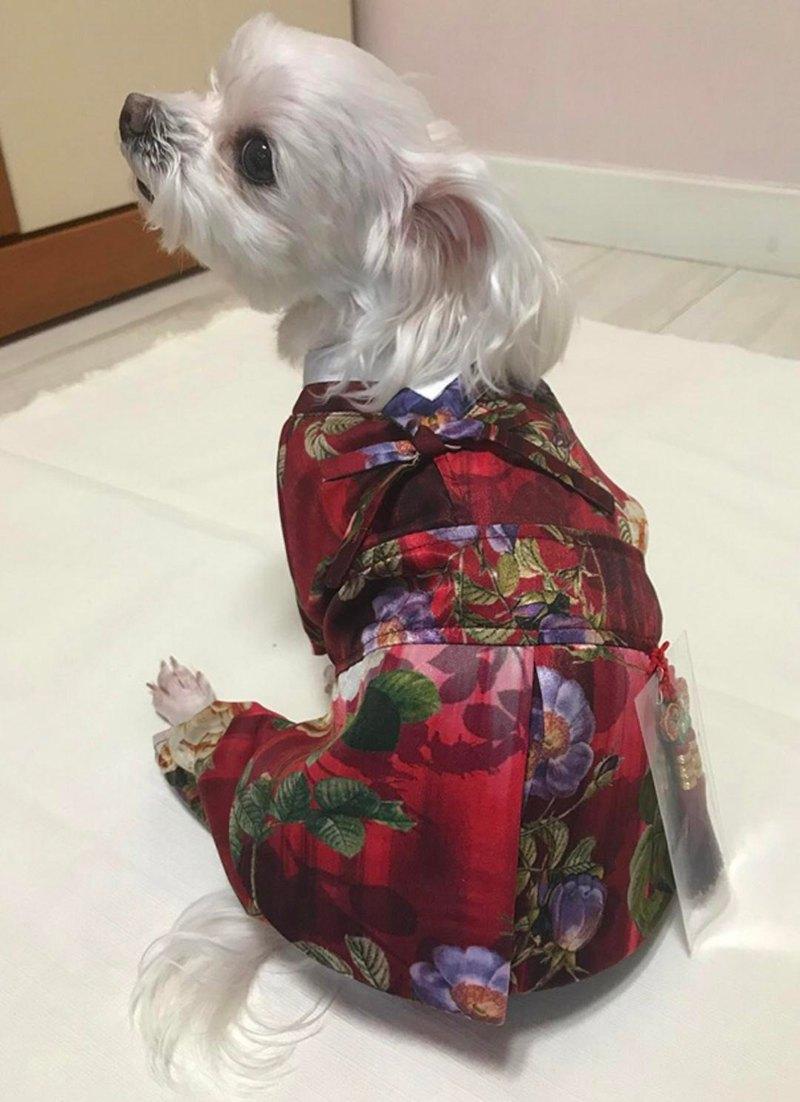 【 心跳事 】生活韓服熱情花-小王子│寵物衣著