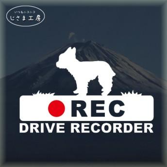 ヨークシャテリアの白色シルエットステッカー‼後方注意‼『DRIVE RECORDER』