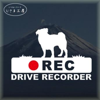 パグの白色シルエットステッカー‼後方注意‼『DRIVE RECORDER』