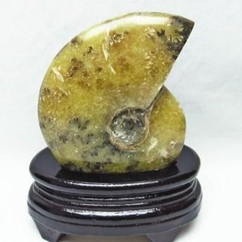 アンモナイト 化石 原石 台座付属 181-945