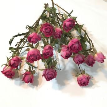 ピンク ミニ薔薇 ドライフラワー