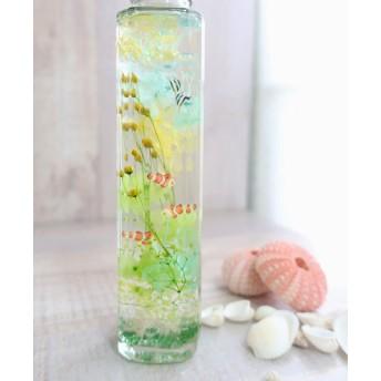 植物ノ瓶詰メ標本Collection 【手のひら水槽:クマノミ&エンゼルフィッシュ】