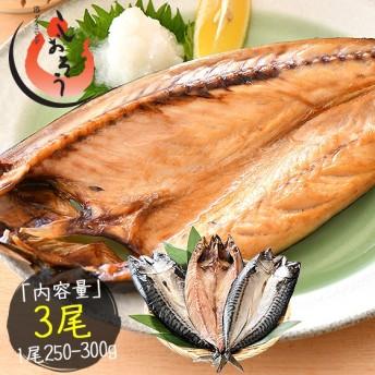 干物 さば サバ 鯖 特大サイズ 約250~300g×3尾 トロサバ とろさば