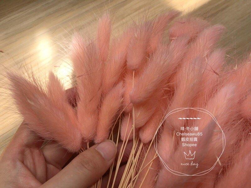 [晴冬小舖] 淡膚粉色兔尾草-進口乾燥花材(乾燥花束 不凋花 乾燥花圈)3D1514